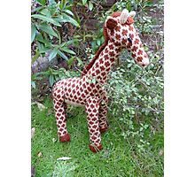 Hand Knitted toy Giraffe Photographic Print