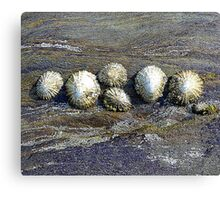 The Barnacle Family Canvas Print