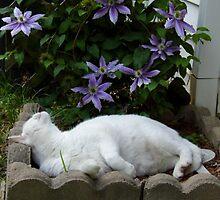 Cat In The Clematis by WildestArt