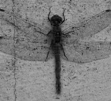 Dragonfly profile by Perggals© - Stacey Turner
