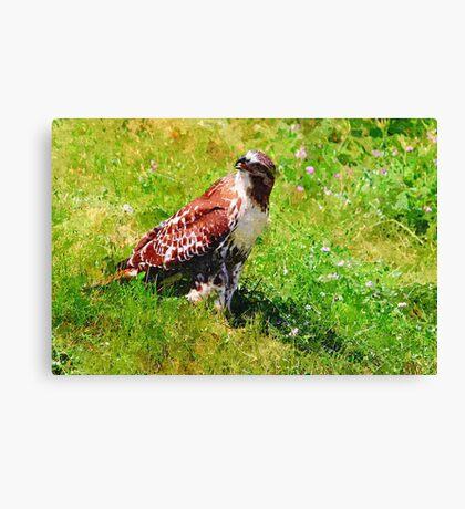 Red Tail Hawk Digital Painting Canvas Print