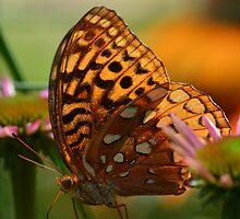 Light Speckled Wings by MichelleAyn