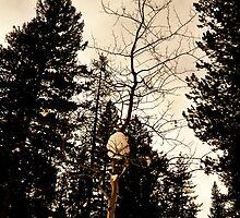 Lone Aspen by CADavis