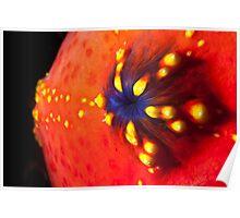 Sea Apple Closeup Poster