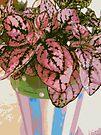 Polka Dot Plant by AuntDot