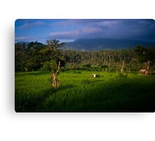 Balinese Rice Fields Canvas Print