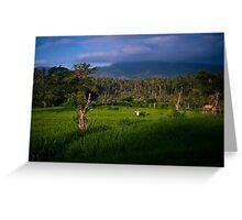 Balinese Rice Fields Greeting Card