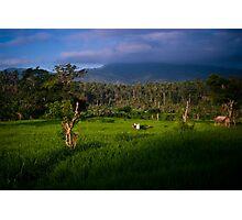 Balinese Rice Fields Photographic Print