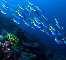 Tropical Fish of Borneo by ZeamonkeyImages