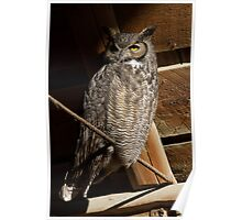 Great Horned Owl: First Light in the Hay Loft Poster