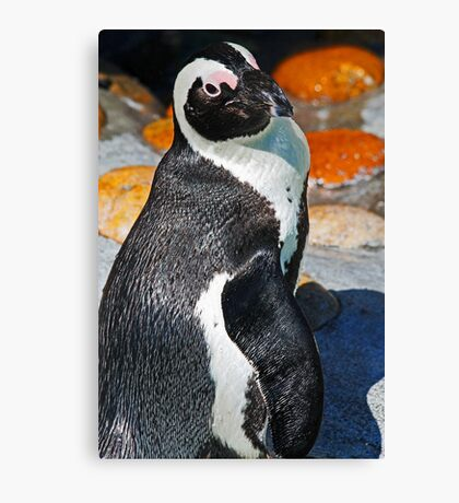 Posing Penguin Canvas Print