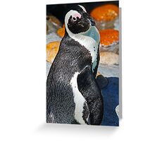 Posing Penguin Greeting Card