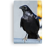 Black Raven Canvas Print