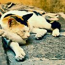 Sleeping cat by pascalplus