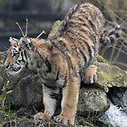 tiger cub by Martynb
