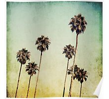 Palm Trees II Poster