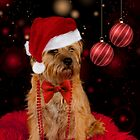 Border Terrier Dog In His Christmas pose by Moonlake