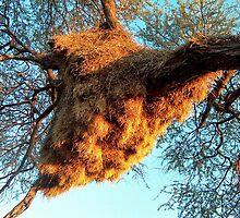 Sociable Weaver Bird Nest - Etosha - Versamelvoëlnes by Rina Greeff