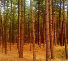 Trees At Newborough by LADeville