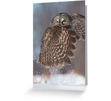 The Caped Crusader - Great Gray Owl. Greeting Card