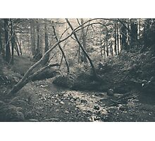Through the Woods Photographic Print