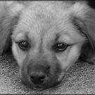 Pure Puppy Breath (Redo) by PatChristensen
