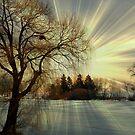 Setting sun © by Dawn M. Becker