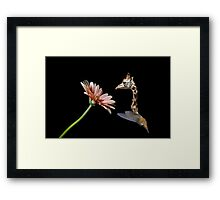 Reaching the high flowers Framed Print