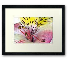 Flower fireworks Framed Print