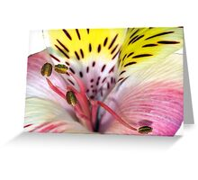 Flower fireworks Greeting Card