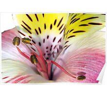 Flower fireworks Poster