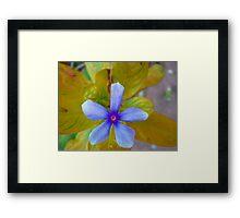 The Wonder Spring Flower On the Mountain  Framed Print