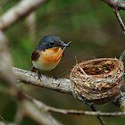 Love Nest by CBoyle