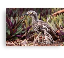 Bush Stone-curlew with Chick Canvas Print