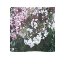 Beautiful Jasmine Flowers In Full Bloom Scarf