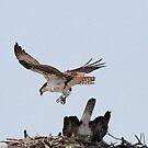 Valentine special-mating osprey style by jozi1