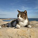 Tabby cat on Sea wall, Denia, Spain by LisaRoberts