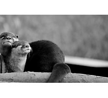 Otter Bliss Photographic Print