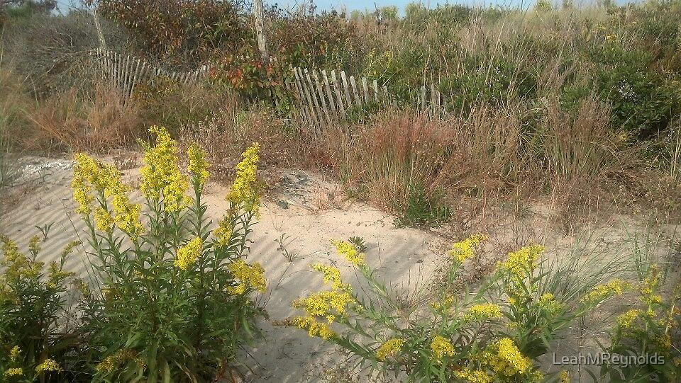 Autumn Dunes by LeahMReynolds