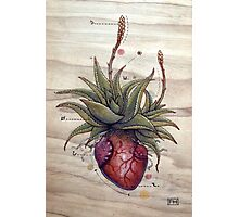Aloe Glauca Heart Photographic Print