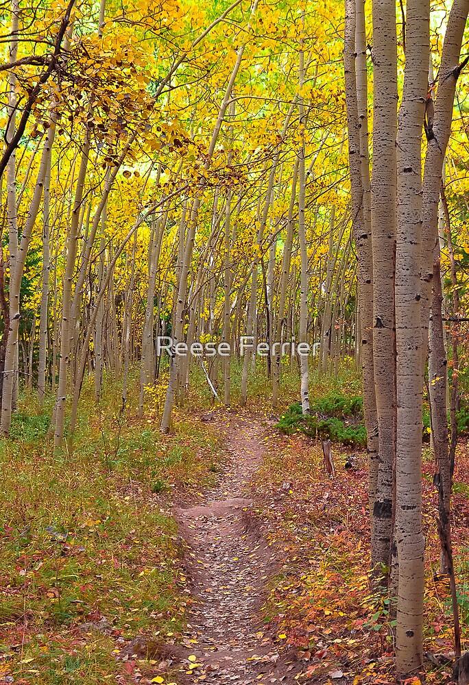 Ben Tyler Trail by Reese Ferrier