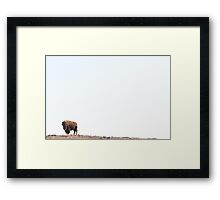 Buffalo Country Framed Print