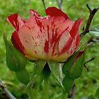 Rose In The Morning by WildestArt