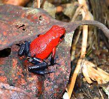 poison dart frog by gruntpig