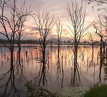 Morning Glory by chloemay