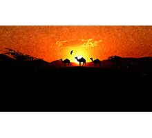Desert Sunset - Silhouette Camels Photographic Print
