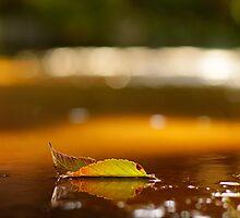 Leaf 3 by ThomsonStudios