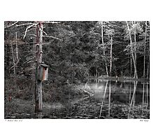 Wooded Refuge Photographic Print