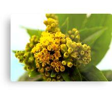 Golden Rod - Solidago Wild Flower  Metal Print