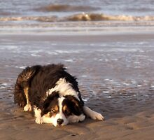 Laddie of the beach. by Michael Haslam
